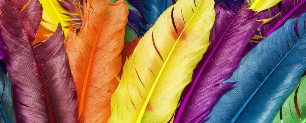 feathers_in_colors-2560x1600