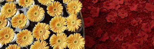floral_art_exhibition-normal